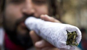 Информация о марихуане