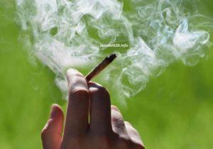 лечение марихуаной