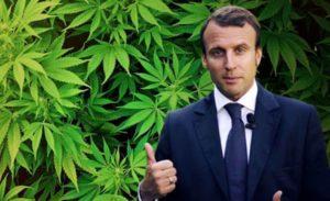 Франция и марихуана